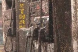 Mayfly Swarm Takes Over Gas Station In Creepy Video 12