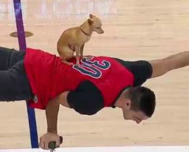 Skillful Chihuahua Wows The Crowd With His Acrobatic Balancing Act During NBA Halftime Show 9