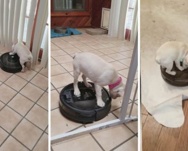 Adorable Puppy Loves Riding On Robot Vacuum 5