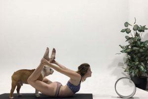 Cute Pooch Sabotages Owner's Yoga Session 11