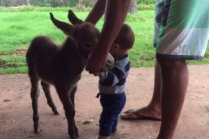 This Baby Mini Donkey And a Baby Human Meeting For The First Time Is What We All Need Today 11