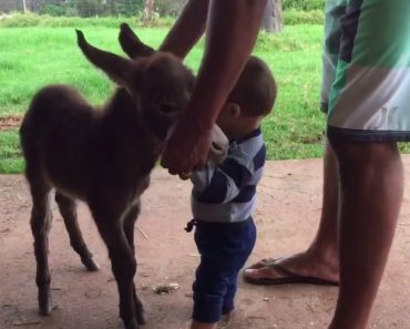 This Baby Mini Donkey And a Baby Human Meeting For The First Time Is What We All Need Today 8