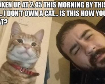 10 People Who Thought They Didn't Have A Cat…They Were Wrong 8