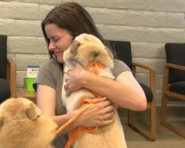 14 Dogs Reunite With Owners After Van Transporting Them Is Stolen in California 3