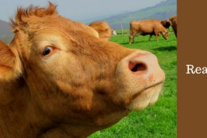 Millions Of Americans Think Chocolate Milk Comes From Brown Cows 12