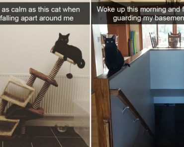 12 Hilarious Cat Snapchats That Are Im-paw-sible Not To Laugh At 7