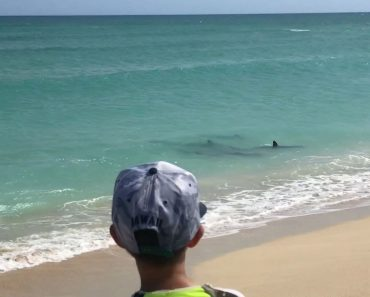 Footage Shows Five Hammerheads Swimming Just Feet From Family's Backyard Beach 2