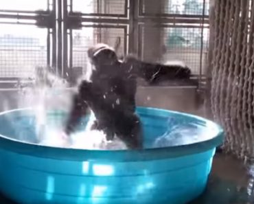 You Need This Breakdancing Gorilla In Your Life Far More Than You Realise 5