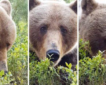 Brave Photographer Captures Bear Up Close 4