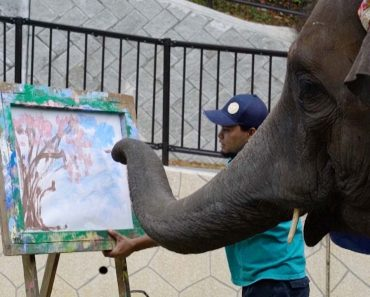 Talented Elephant Creates Amazing Artwork 1