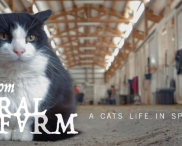 From Feral To Farm: A Cat's Life In Spokane 2