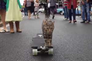 This Bengali Cat Skateboards Better Than Most Humans 10