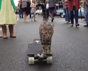 This Bengali Cat Skateboards Better Than Most Humans 9