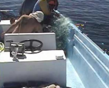 Humpback Whale Puts On Show For Men Who Saved Her 3