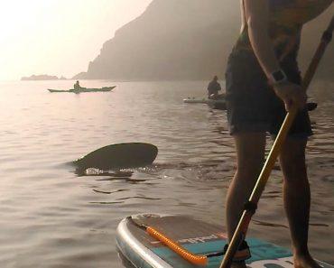 Kayaker's Boat Gets Rocked By Giant Basking Shark 8