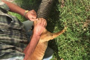 Good Samaritan Rescues Dog From Pipe 12
