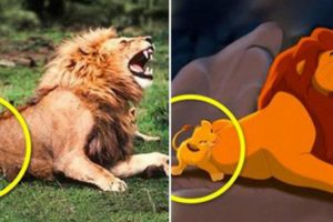 12 Photos Of Cartoon Characters Found In The Real World 10