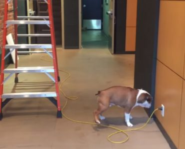 Bentley The Bulldog Overcomes His Fear Of Wires And Ladders By Changing His Perspective 1