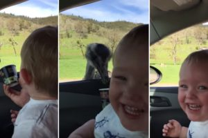 Adorable Toddler Cracks Up When His Hungry Ostrich Friend Comes For A Visit 12