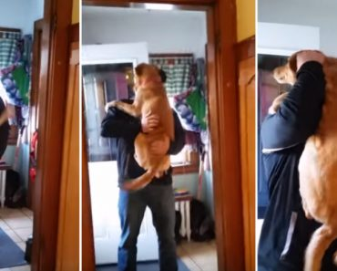 When Her Favorite Human Returned From Business, She Was The Happiest Dog Ever 3