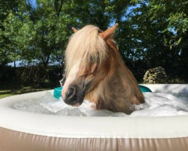 Ponies Put Their Hooves Up As They Are Pampered At Horse Spa 9