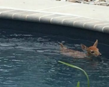 Deer Cools Down By Hopping Into New Jersey Homeowner's Pool Every Day - And Even Uses Jacuzzi 1
