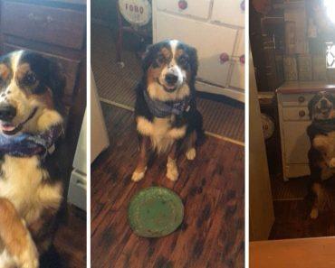 Dog Nurses Owner Back To Health 3