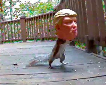Donald Trump Squirrel Feeder 9
