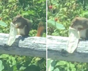 Squirrel Is Caught On Camera In Stomach-Churning Video Eating Out Of A Used Condom! 3