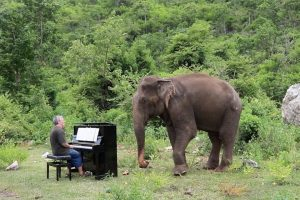 Pianist Performs Classic Music For Blind Elephant 9