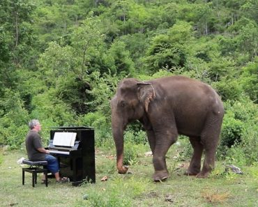 Pianist Performs Classic Music For Blind Elephant 3