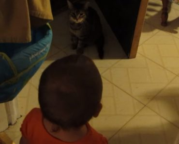 Every Day, This Cat Has Adorable Conversations With Her Baby Sister 9