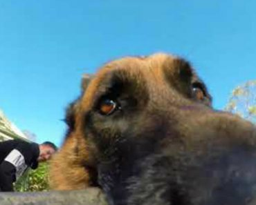 Mischievous Dog Plays Game Of Keep-Away With Owner's Gopro 3
