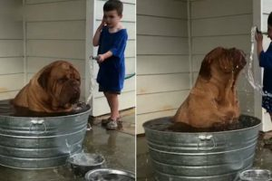 World's Most Miserable-Looking Dog Is Jetted With a Hose By a Playful Boy 12