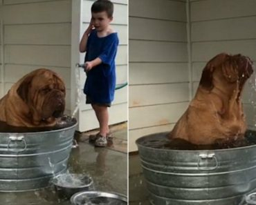 World's Most Miserable-Looking Dog Is Jetted With a Hose By a Playful Boy 5