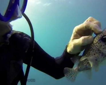 While Diving In Hawaii, This Tourist Made An Unlikely Little Friend 1