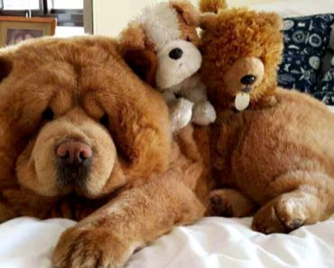 This Adorable Dog Is So Fluffy People Mistake Him For A Stuffed Animal 1