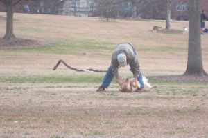 Watch Hilariously Clever Dog Play Dead To Stay At The Park Longer 12