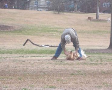 Watch Hilariously Clever Dog Play Dead To Stay At The Park Longer 5