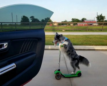 """Dog on Scooter has Best """"Shiggy Challenge"""" Video Yet 4"""