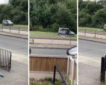Lazy Owner Walks Dog From Inside Car 5