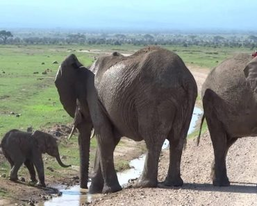 This Baby Elephant Absolutely Refuses To Cross a Big, Scary Stream 4