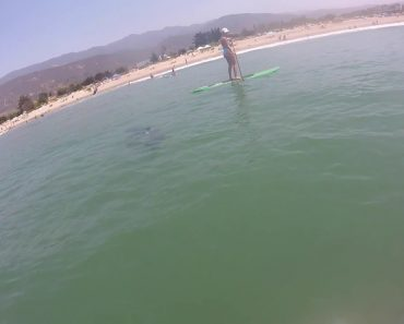 Great White Shark Swims Terrifyingly Close To Paddle Boarders 7