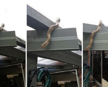 Exotic Taiwanese Snake Found In UK Home 1