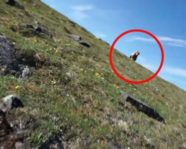 Tense Footage Shows Man Come Face-To-Face With Bear In The Wild, And He Doesn't React Well 2