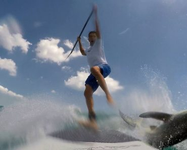 Paddle Boarder Catching a Wave Freaks Out When He Gets a Surprise From a Spinner Shark 9