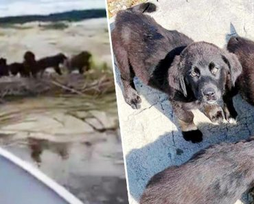 """7 Puppies Rescued from Remote Island During """"Operation Gilligan's Island"""" 5"""