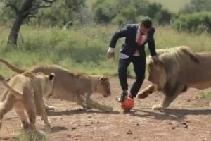 Incredible Moment Man Plays Football With Wild Lions 10