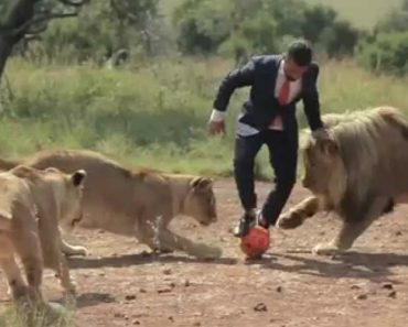 Incredible Moment Man Plays Football With Wild Lions 4