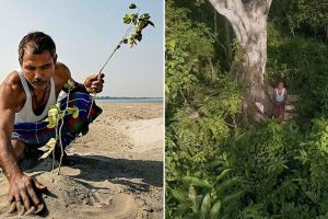 This Man Turned A Desert Into A Forest By Planting A Tree Everyday For 40 Years 9